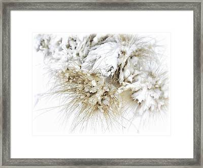Snow Whiskers Framed Print by Julie Palencia