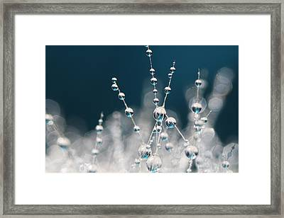 Snow White And Ice Blue Framed Print by Sharon Johnstone