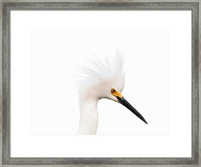 Framed Print featuring the photograph Snow White Egret by Phil Stone