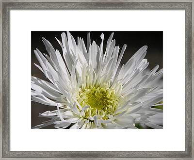 Snow White Framed Print by Lucy Howard