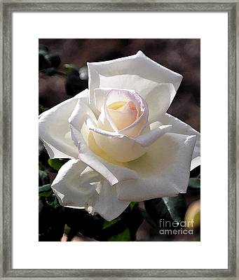 Snow White Rose Framed Print