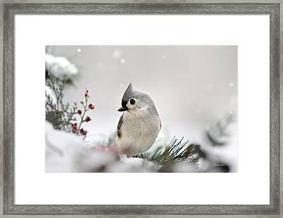 Snow White Tufted Titmouse Framed Print by Christina Rollo