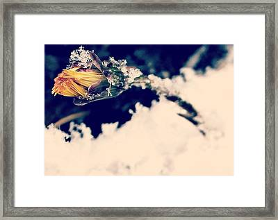Framed Print featuring the photograph Snow Wildflower by Candice Trimble