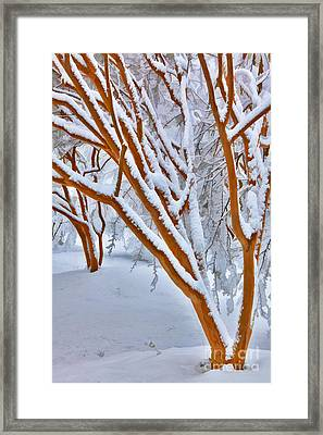 Snow Wonderful Snow - Greensboro North Carolina Framed Print by Dan Carmichael