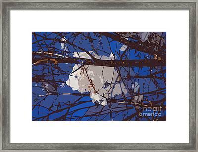 Snowball Framed Print by Carol Lynch
