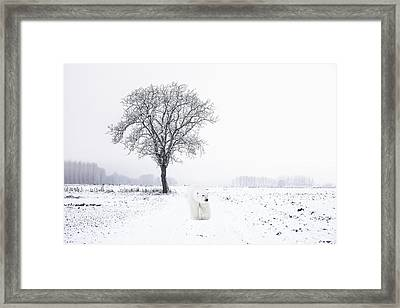 Snowbird Framed Print by Daniel Hagerman