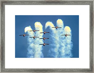Snowbirdas Inverted Framed Print by Frank Savarese