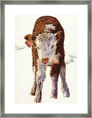 Country Life Winter Baby Calf Framed Print