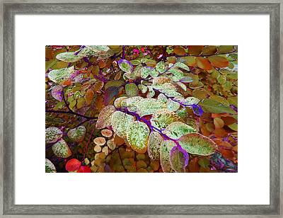 Framed Print featuring the photograph Snowbush by Ginny Schmidt