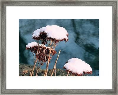 Snowcapped Framed Print by Janice Drew