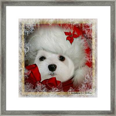 Snowdrop  And  Santa Hat Framed Print