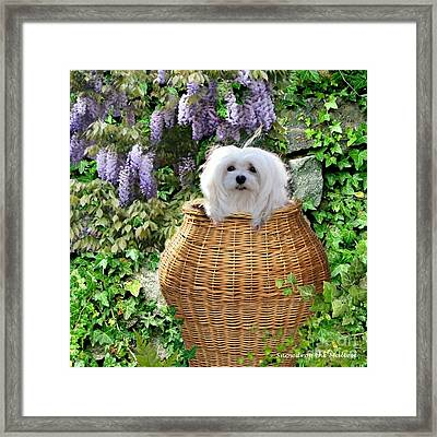 Snowdrop In A Basket Framed Print