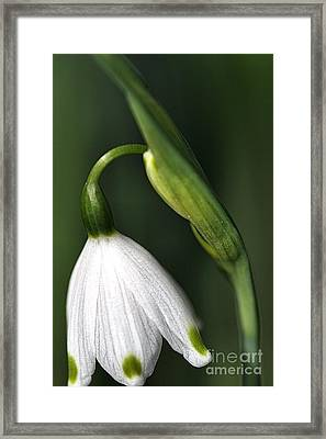 Framed Print featuring the photograph Snowdrop by Joy Watson