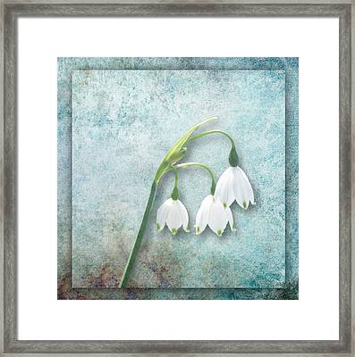 Snowdrop Framed Print by Lynn Bolt