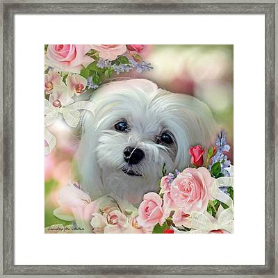 Snowdrop The Maltese Framed Print
