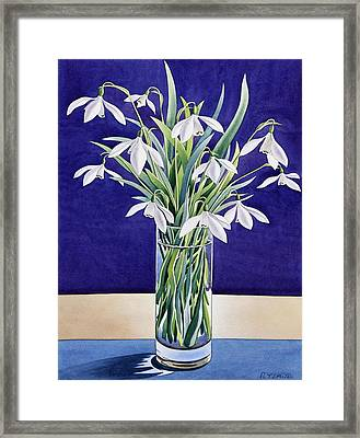 Snowdrops  Framed Print by Christopher Ryland