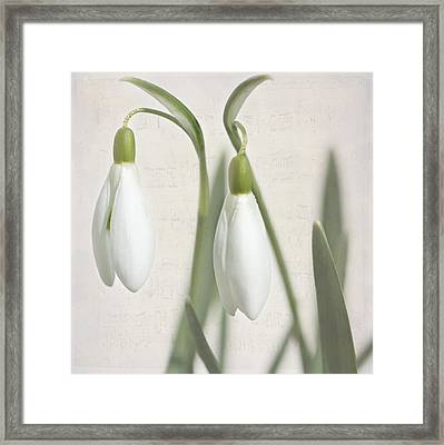Snowdrops In Spring Framed Print by Heike Hultsch