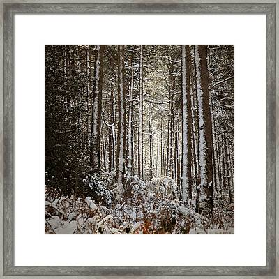 Framed Print featuring the photograph Snowed Forest by Antonio Jorge Nunes