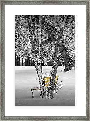 Snowfall At Garfield Park With Yellow Park Bench No. 0963bw Framed Print