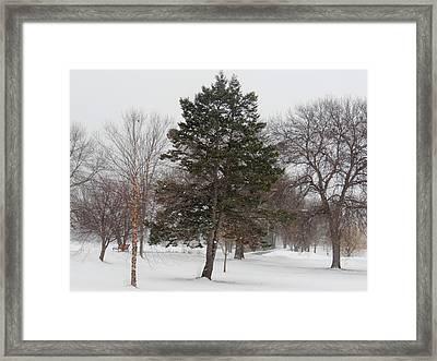 Snowfall Dreams Framed Print