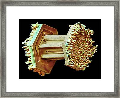 Snowflake Framed Print by Ars/us Department Of Agriculture