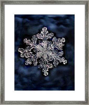 Snowflake Blue Framed Print by Lorella  Schoales