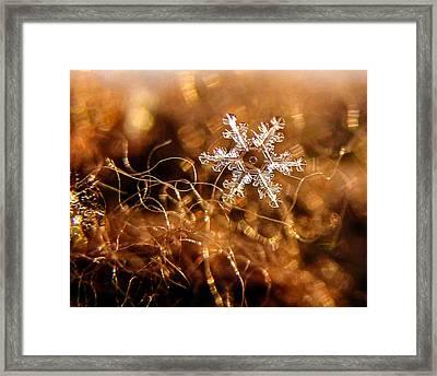 Snowflake On Brown Framed Print
