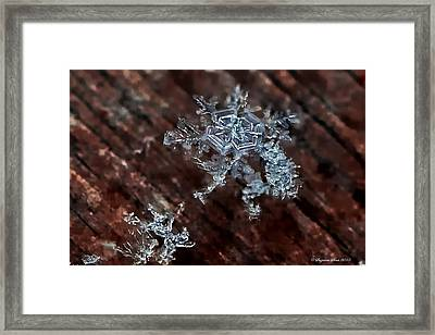 Snowflake Framed Print by Suzanne Stout