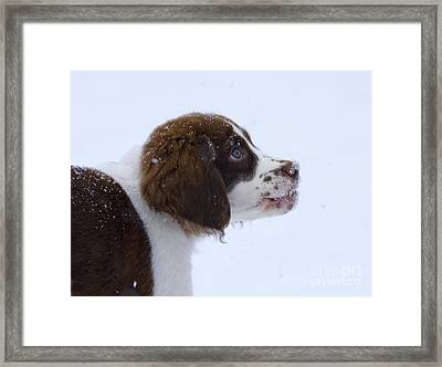 Snowflake Wonder Framed Print by Mike  Dawson