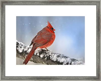 Snowing On Red Cardinal Framed Print