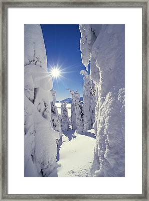 Snowscape Snow Covered Trees And Bright Sun Framed Print by Anonymous
