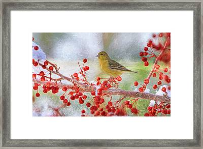 Snowy Beak Framed Print by Donna Kennedy