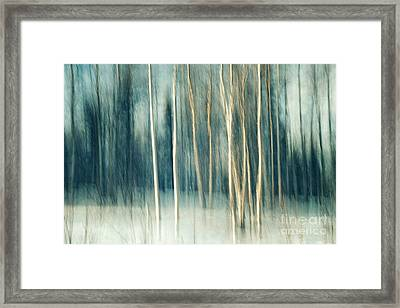Snowy Birch Grove Framed Print