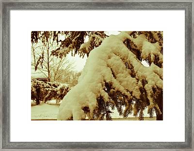 Snowy Branch Framed Print by Nickaleen Neff