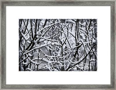 Snowy Branches Framed Print by Birgit Tyrrell
