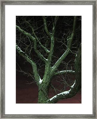 Snowy Branches Framed Print by Guy Ricketts