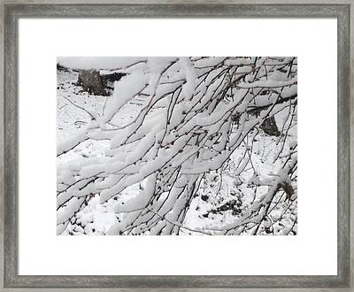 Snowy Branches Framed Print by Donna Dixon