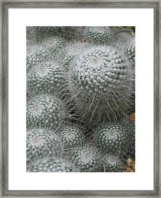 Snowy Cactus  Framed Print