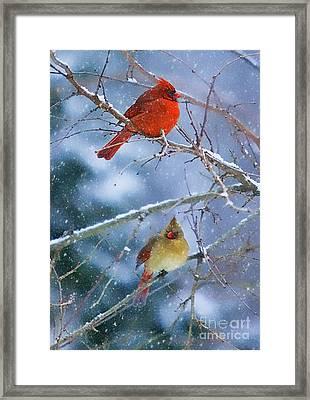 Snowy Cardinal Pair Framed Print