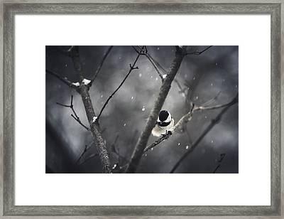 Snowy Chickadee Framed Print