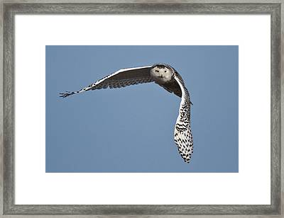 Snowy Framed Print by Wes and Dotty Weber