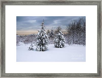 Snowy Dawn Framed Print by Deborah  Bowie