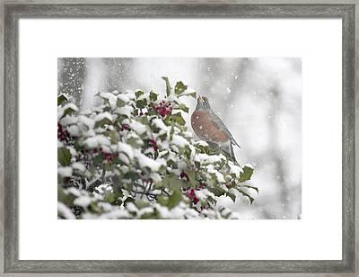 Snowy Day Robin Framed Print