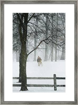 Snowy Deer Framed Print