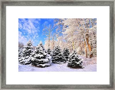 Snowy Dreams Framed Print by Angel Cher