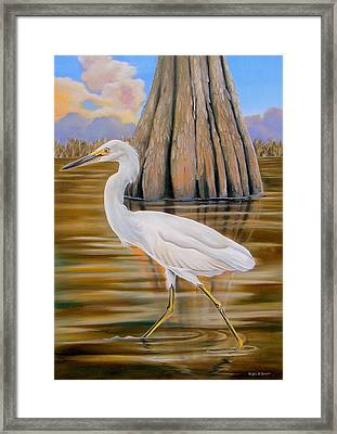 Snowy Egret And Cypress Tree Framed Print by Phyllis Beiser