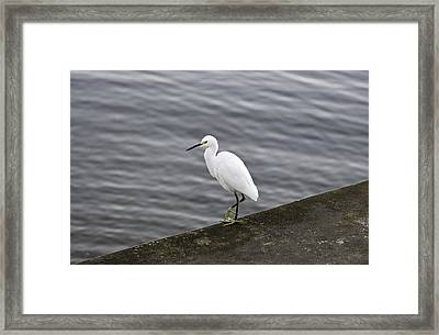 Framed Print featuring the photograph Snowy Egret by Anthony Baatz