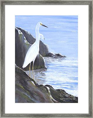 Snowy Egret Framed Print by Bill Holkham