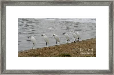 Snowy Egret Breakfast Club Framed Print by Bob and Jan Shriner