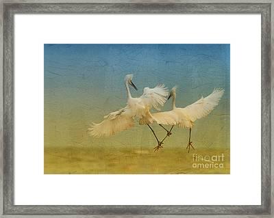 Snowy Egret Dance Framed Print by Deborah Benoit